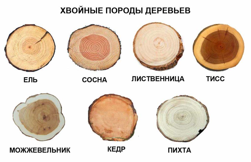 Определяем породу дерева по спилу